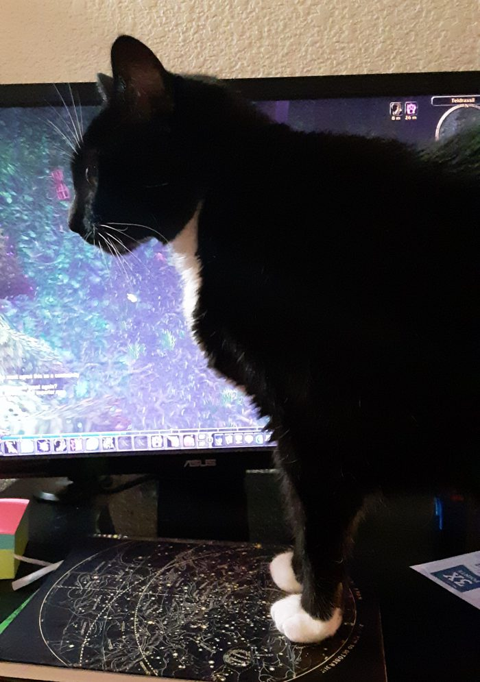 Huey the cat, standing in front of my computer monitor