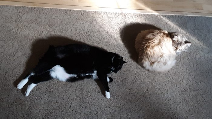 Huey and Viola lying near each other on the floor in a patch of sunshine