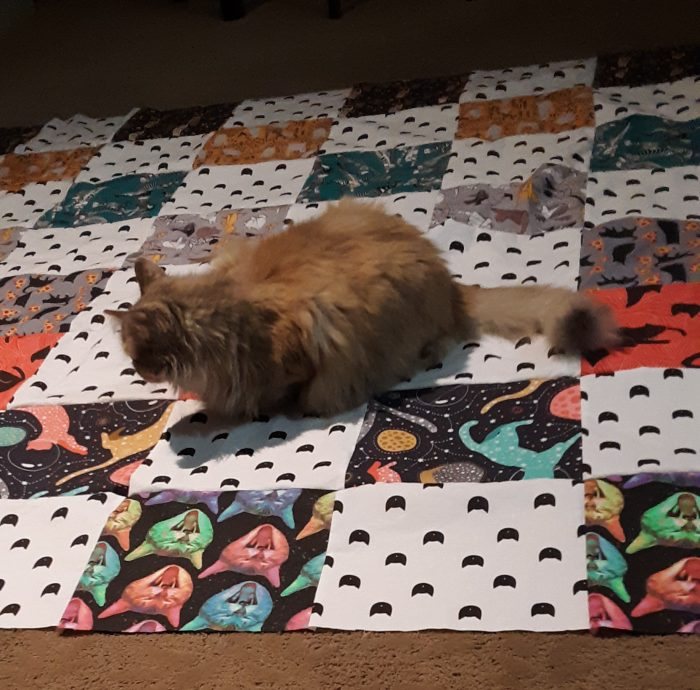 Viola the cat standing on the newly assembled quilt top