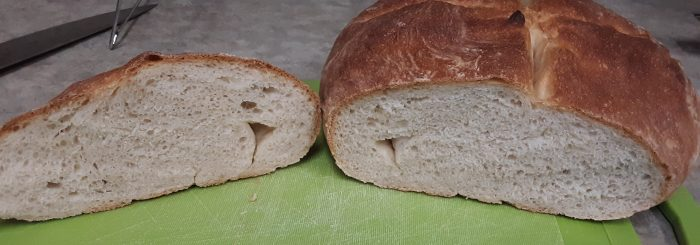 cross-section of the round loaf