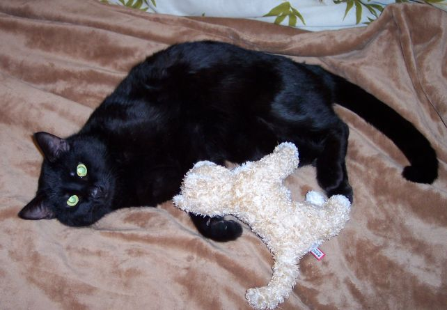 Khan the cat lying on a bed with a small plush cat