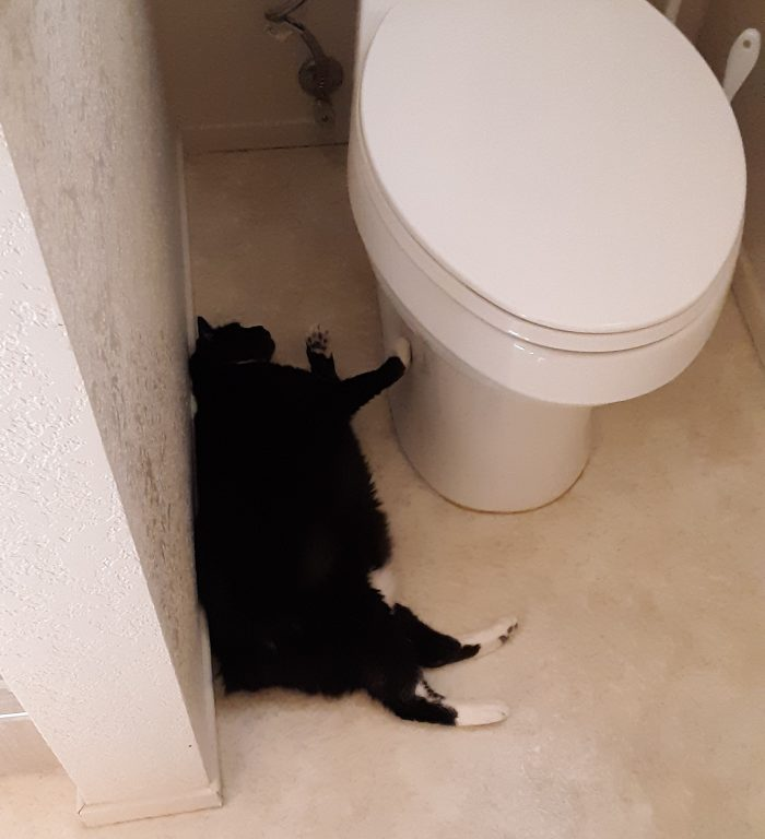 Huey the cat lying on the floor next to the toilet with one paw on the toilet