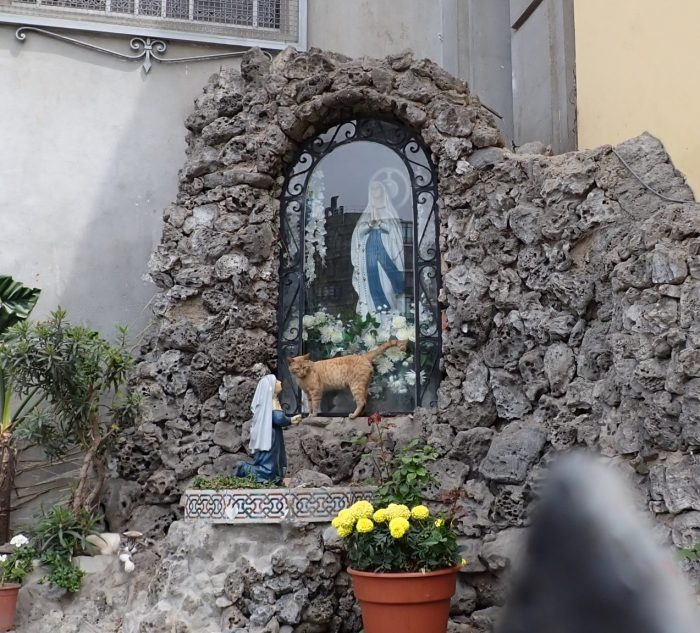 A cat standing in front of an image of Mary on a shrine