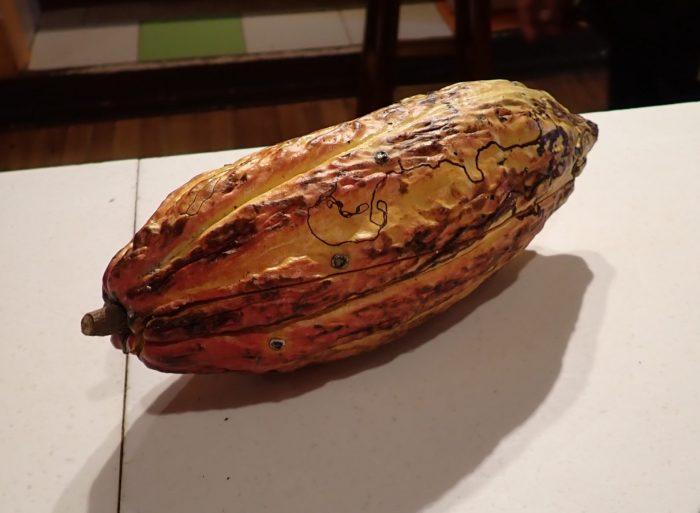 a cocoa bean pod