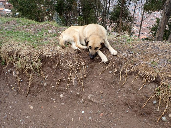 a dog lying in the dirt