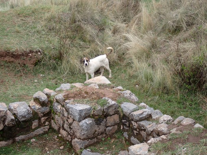 a dog near the temple of the moon