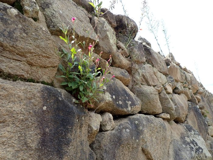 a small flowering plant growing out of a stone wall