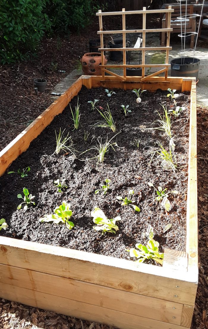 a garden bed with four types of plants