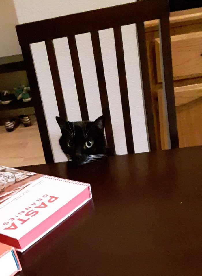 Huey the cat, seated at the dining table with her head poking over the edge of the table