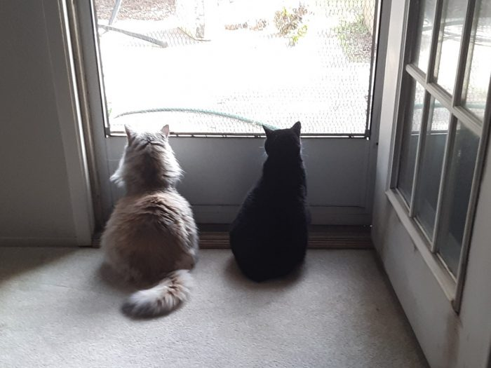 Huey and Viola sitting in front of the screen door and looking outside, shot taken from behind