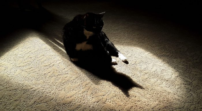 Huey the cat bathing in a patch of sun, she is backlit and casting a shadow of her head on the floor