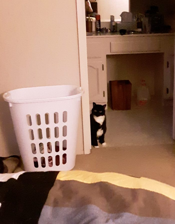 Huey the cat standing in the bathroom doorway and judging me