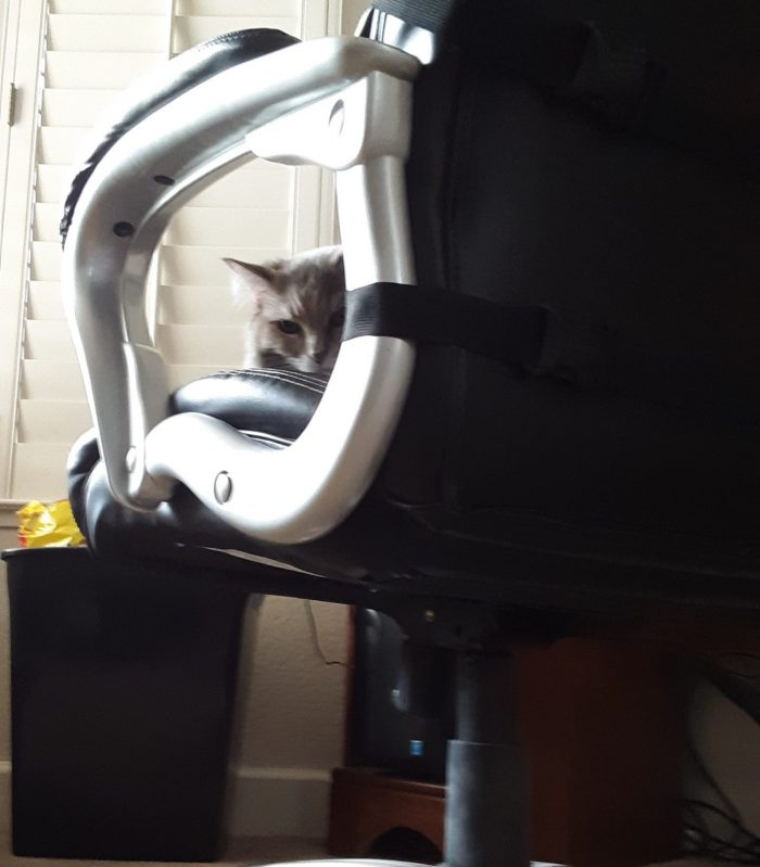 Viola, peeking through the armrest of a chair