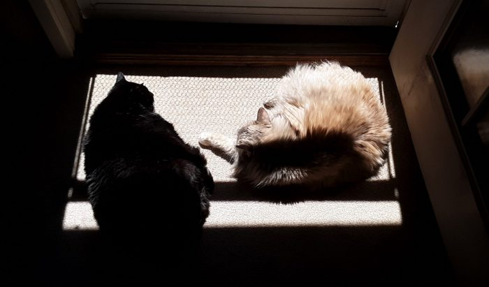 Huey and Viola the cats sunning themselves in a square of sunshine