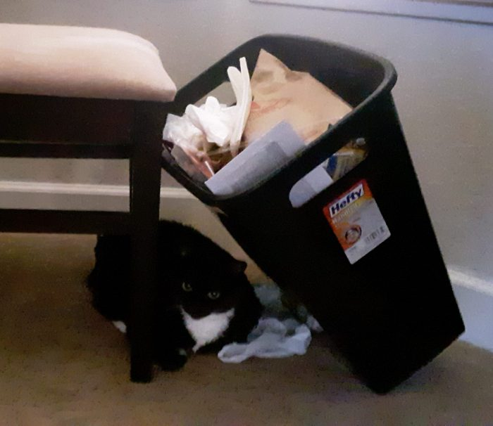 Huey the cat under a lean-to of a trash can leaning against a chair