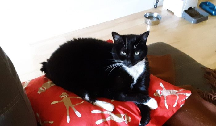 Huey the cat sitting on a pillow