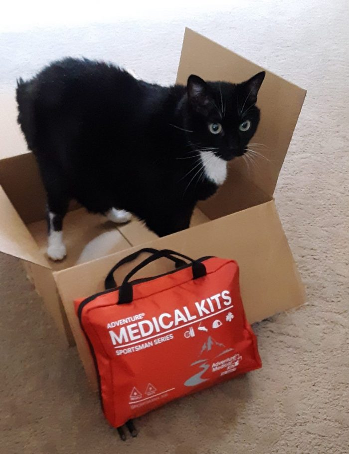 Huey the cat standing in a box. There is a first aid kit leaning against the box