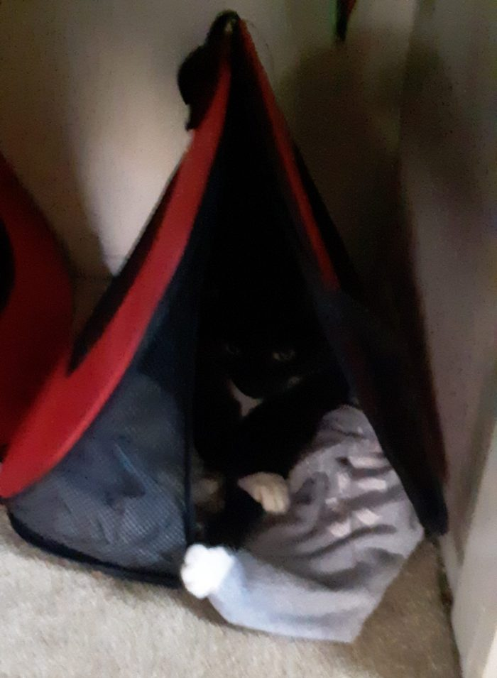 Huey the cat, lounging in her carrier tucked into the closet. Huey is shadowed so you mostly only see her white paws and her eyes
