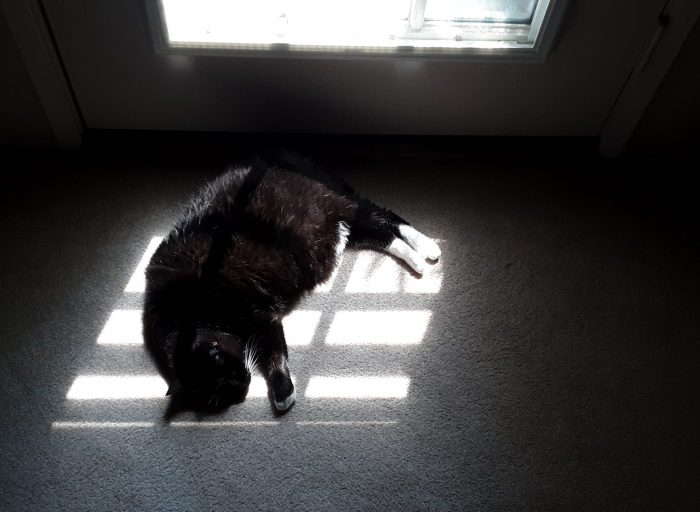 Huey the cat lying in a small patch of sunlight