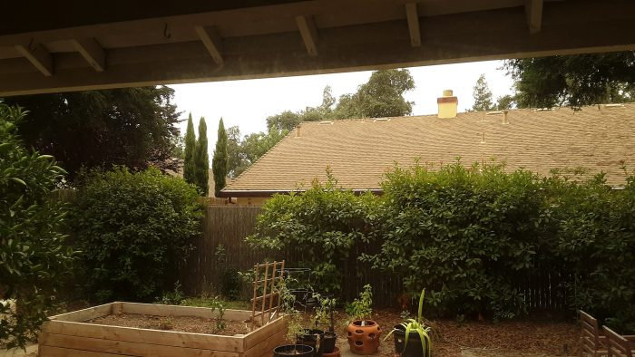 view of my backyard with gross, yellow air