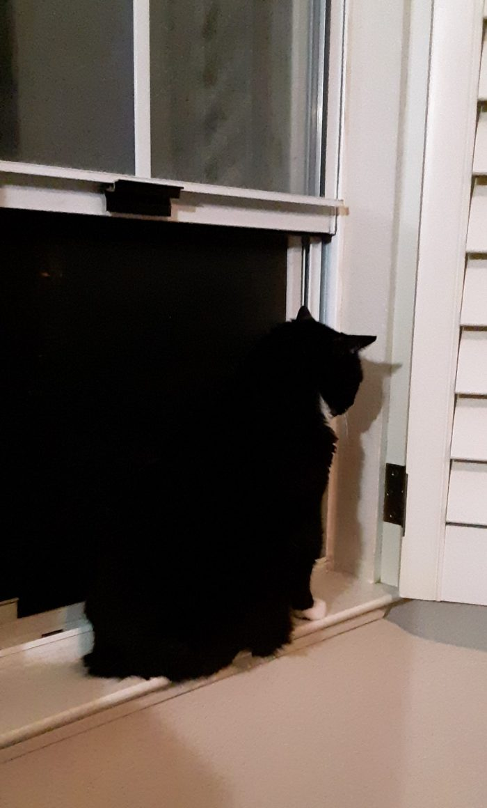 Huet the cat, sitting in front of an open window at night. Huey is black and barely visible
