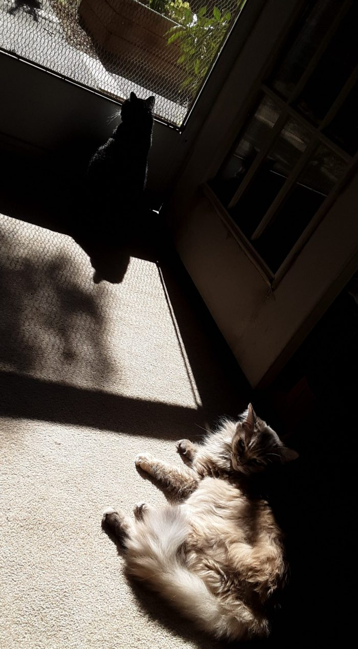 Viola the cat lounging in the sun in front of an open door, Huey the cat sitting alert in front of the screen and looking outside