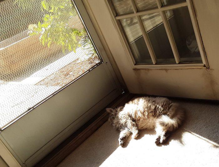Viola the cat sunning herself in fron of the screen door