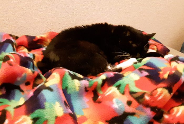 Huey the cat sleeping on a colorful blanket
