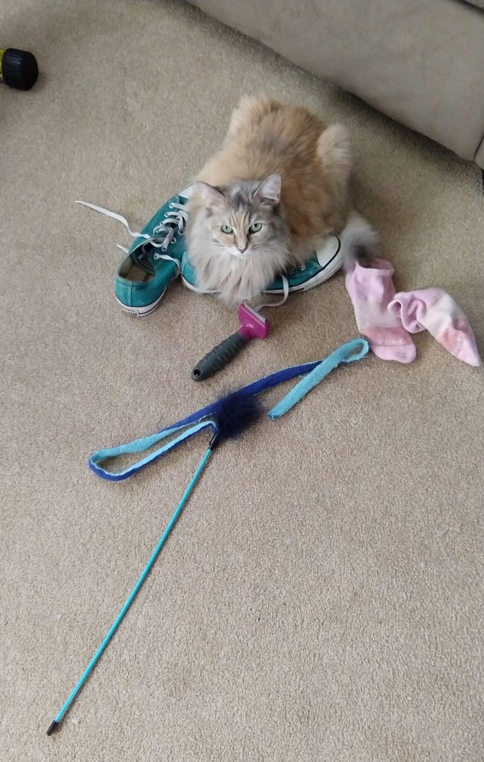 Viola the cat sitting on top a pair of shoes, with a brush, pair of socks, and feather toy next to her