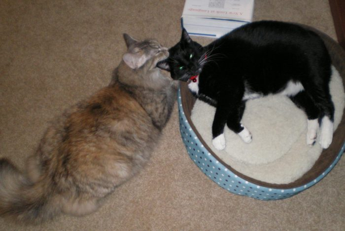 Huey the cat lying in a round cat bed, Viola outside, grooming Hueys head