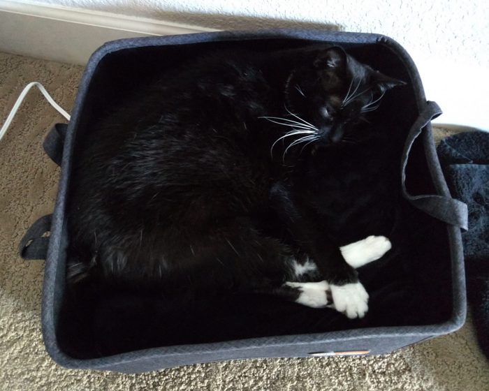Huey the cat curled up in a bed/basket that has a heating pad on the bottom