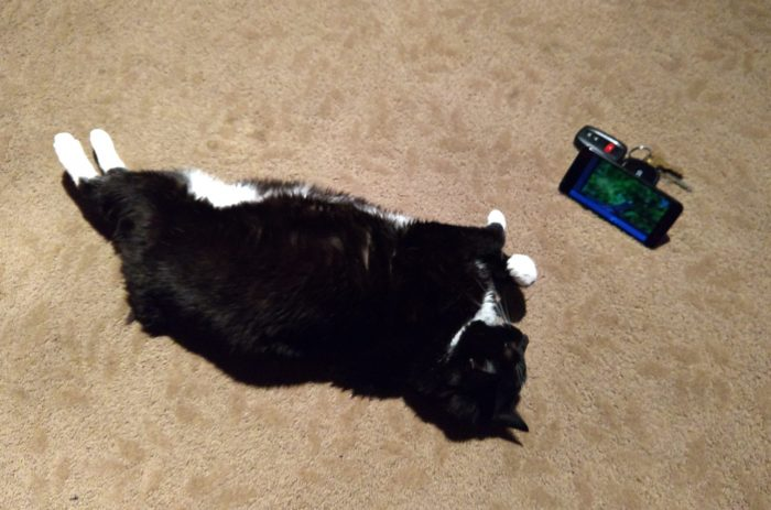 "Huey the cat lying on her side, looking at a cell phone. The phone is propped up and playing a ""cat TV"" youtube video"