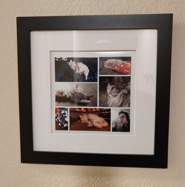 A framed photo collage featuring 7 photos of Viola the cat