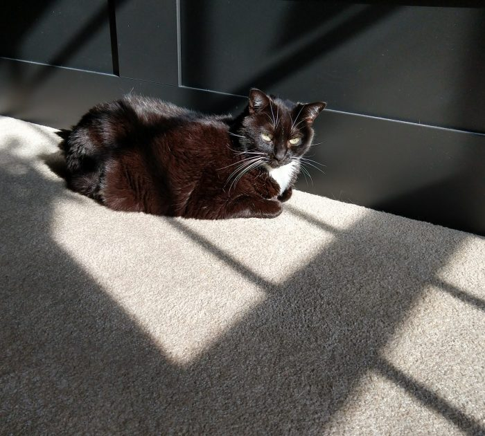 Huey the cat sitting on the floor next to the bed. The sun is shining on her and makes her black fur look dark brown.