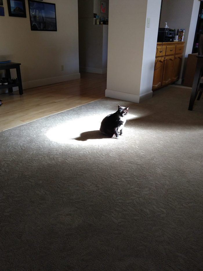 Huey the cat in the middle of the living room. She is sitting in the single patch of sunlight, her shawdow is visible beside her.