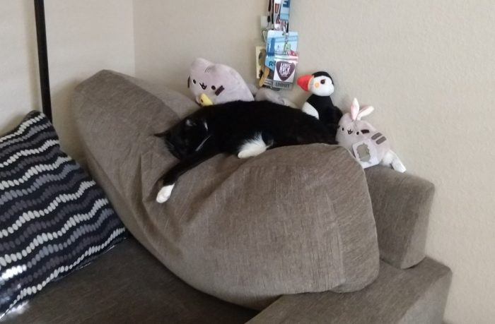 Huey lounging on top of her chair in front of her stuffed animals