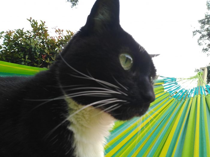 a close-up photo of Huey's face in profile with the hammock in the background