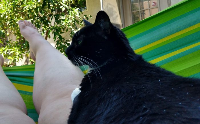 Huey the cat chilling in the hammock. She is lying on top of my thigh and squinting into the middle distance