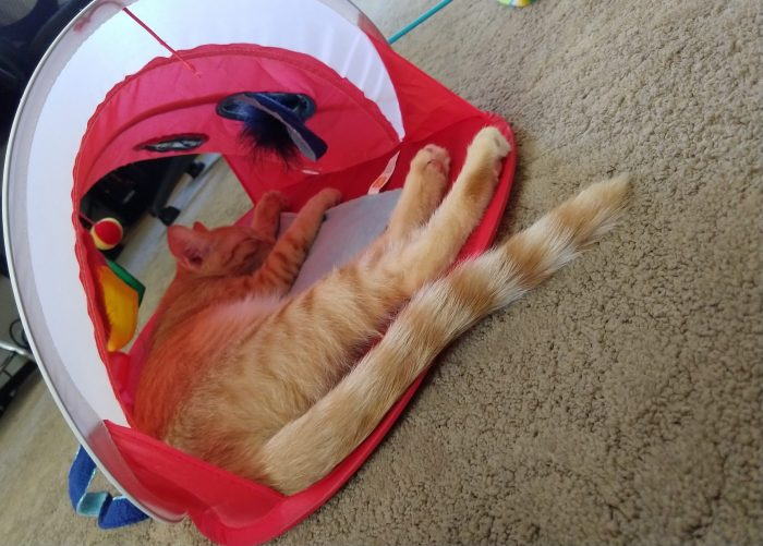 Fritz the cat, lying on his side inside a small play tent. Picture taking looking into the tent