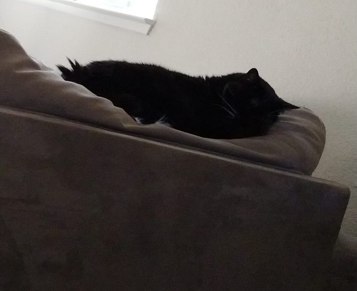 Huey the cat sleeping on top of a couch cushion