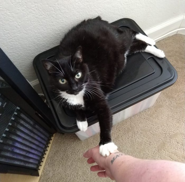 Huey the cat lying on top of a plastic bin, her paw touching my hand
