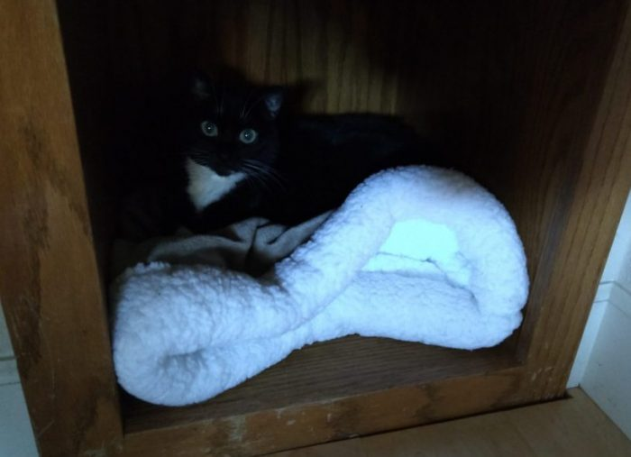 Huey the cat lounging in the bottom shelf of a storage area that has a little cat bed inside