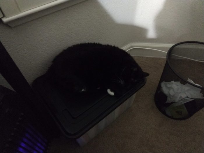 Huey curled up and snoozing on top of a plastic box for files that sits next to my computer