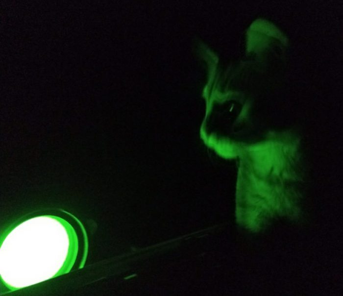 Fritz the cat, illuminated by a yellow-green light in an otherwise dark room