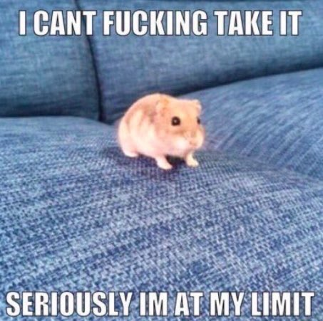 """an overwhelmed-looking hamster on a sofa with blocky white text that says """"I can't fucking take it. Seriously I'm at my limit"""""""
