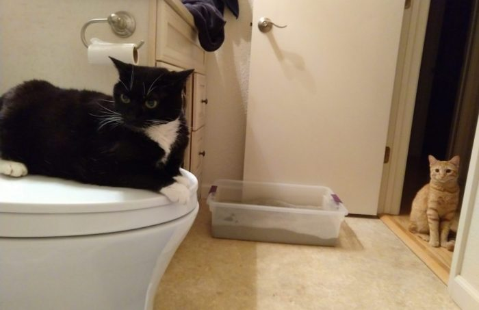 Huey sitting in judgment on top of the toilet, Fritz sitting in the doorway and looking concerned